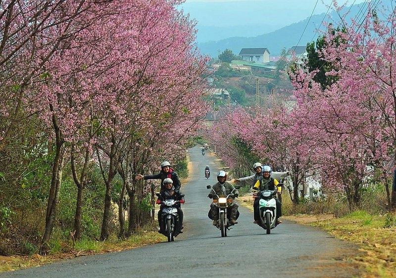 Đà Lạt rừng hoa nở rộ