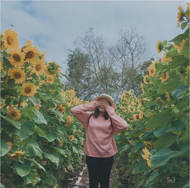 Tạp dáng khoe sắc bên hàng hoa hướng dương